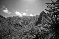 All that's Green is Black (Mark Griffith) Tags: bw hawaii hiking hike northshore kauai napalicoast dayhike kalalautrail dawnpatrol silverefexpro2 20160414dsc04336edit