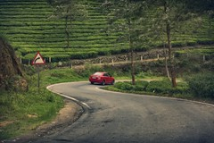 """"""" A travel to nature paradise"""". (Madhan's Photography) Tags: travel munnar munar travelphotography madhsns madhansundhar madhansphotography atraveltonatureparadise"""