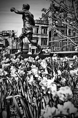 Tony DeMarco Statue Boston's North End (Silverio Photography) Tags: blackandwhite flower st statue boston photoshop canon tony elements pancake 24mm hanover hdr northend topaz adjust dimarco primelens 60d