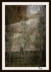 Poplar (patrick.verstappen) Tags: trees winter sky texture photo google nikon flickr poplar pat sigma stormy hdr textured facebook picassa twitter gingelom ipernity d7100 pinterest ipiccy picmonkey