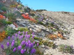 Flowers (jeromebennett58) Tags: flowers summer oregon nikon hike mthood