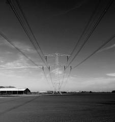 in one line explored 29-04-2016 (Roel Oortwijn) Tags: blackandwhite bw holland monochrome lines zwartwit polder zw lowland electricty electriciteit explored inexplore wijkermeerpolder