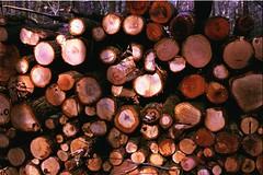 logs for the fire (ercastrob) Tags: woods nikonfa oberursel canoscan8800f eichwldchen agfavistaplus400