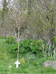 0306c (Andy in relax mode) Tags: flowers mmm ccc fff ttt memorialcross memorialtree aberlleiniog picnicplatz 20160426