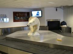 Trip to Svalbard. (carina.ericsson) Tags: airport svalbard polarbear longyearbyen