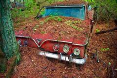 Pining away.... (tvdflickr) Tags: old chevrolet car georgia antique chevy trunk rusting junkyard pinestraw oldcarcity oldcarcitywhitegeorgia