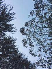 Lneas imaginarias (HectorVaM) Tags: trees rboles outdoor airelibre