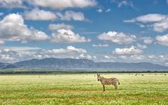 Welcome to Paradise, Serengeti (candid-eye) Tags: africa travel family vacation holiday tanzania serengeti chutti sonya6000 africa2015