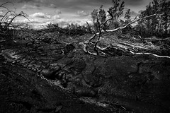 Desolation (dtru7298) Tags: blackandwhite white black tree monochrome lines contrast landscape death hawaii lava sticks branch destruction stark