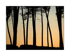 Au-del des barrires ... (eric_47) Tags: sunset france tree nature pine pin arbre coucherdesoleil landes aquitaine lotetgaronne bousses