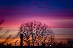 Winter Tree Silhouette (CAUT) Tags: winter light sunset sky espaa color luz silhouette atardecer twilight spain nikon dusk january magenta enero cielo invierno silueta mad crepusculo anochecer 2016 d610 lemd caut madridbarajas nikond610