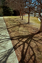 Shadow Paint (amy.gallacher) Tags: trees winter shadow lines colorado branches sony warmer nex3n