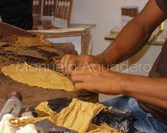 #puro #cigar #artesana #crafts #amano #byhand #2010 #repblicadominaca #turismo #tourism #photography #photographer #sonyalpha #sonyalpha350 #sonya350 #alpha350 (Manuela Aguadero) Tags: tourism photography photographer crafts cigar turismo artesana puro amano byhand repblicadominicana sonyalpha sonyalpha350 sonya350 alpha350