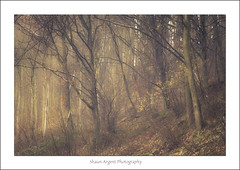 Spa Gill wanderings (shaun.argent) Tags: trees winter tree texture nature weather woodland woods flora seasons shaunargent spagill
