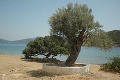 DSC_0068 (chaudron001) Tags: grece favoris