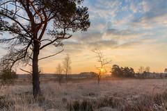 Morning glow (wimdebaets) Tags: belgi be lanaken vlaanderen