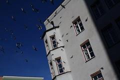 gib uns Frieden jeden Tag lass uns nicht allein (raumoberbayern) Tags: sky heaven peace himmel frieden doves wasserburg tauben robbbilder urbanfragments