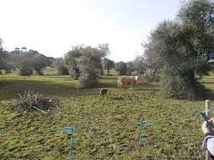 2016.02.21_OlhosAgua_Alcanena_1920x_012 (PatricioDomingues) Tags: portugal water gua olhosdeagua alviela 20160221