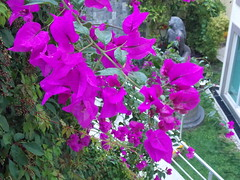 DSCN2511 (Alejandra Fajardo) Tags: la reserva querataro milenio iii 3 qro mexico suites hotel escultura mujer plantas paisaje naturaleza jardin nature landscape flowers bugambilia trendy chic