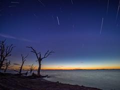 Sunset to Night (Rhino300) Tags: sunset sky tree water general olympus southaustralia lakebonney omdem1