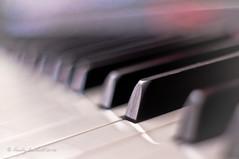 Vanishing Keys (brady tuckett) Tags: flowers light musician music color macro colors keys 50mm keyboard bokeh piano m42 f2 macros pianos brady manualfocus petri tuckett manuallens m42mount m42lenses orikkor bradytuckett petriorikkorkuribayashi50mmf2 petriorikkorkuribayashi