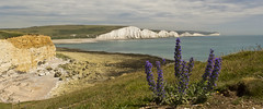 Vipers Bugloss and the Seven Sisters (Keith in Exeter) Tags: sea england panorama cliff flower beach grass landscape sussex coast chalk nationalpark outdoor iconic sevensisters englishchannel bugloss greaterphotographers greatestphotographers