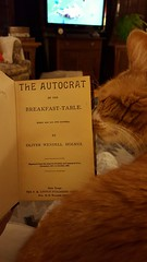 Byron says put down the book and pet me (Mamluke) Tags: home television breakfast cat fur table nose book pages rugby page petting title byron holmes 1858 autocrat boswell 6nations 1857 reprint oliverwendellholmes mamluke theautocratofthebreakfasttable everymanhisownboswell