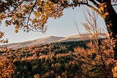 Mont ventoux automne (jo.seppy) Tags: new autumn france montagne automne kodak provence 69 mont couleur sud ventoux portra160