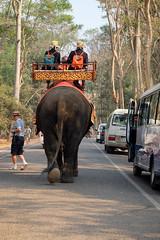 (Valerio Soncini) Tags: elephant cambodia kambodscha khmer kh siemreap angkor elefant khmerart krongsiemreap