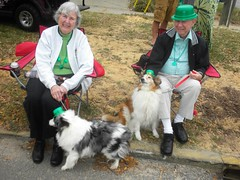 St. Patricks Parade (Just Back) Tags: street hairy holiday man silly color green sc smile face kids lady fur fun miniature spring collie small hats saturday columbia parade carolina paws seated devine miaiture