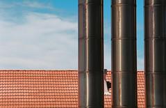 RAD20160306_Roll-2_022 (Kodak Ektar 100; Nikon FM3A) (Cecilia Temperli) Tags: film nikon kodak sydney australia nsw newsouthwales sydneyharbour gardenisland nikonfm3a portjackson kodakektar100 arollinadayadayinaroll rad20160306