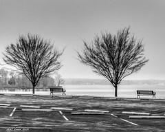 Benches By the Lake (that_damn_duck) Tags: bw blackwhite unitedstates southcarolina lakemurraysc