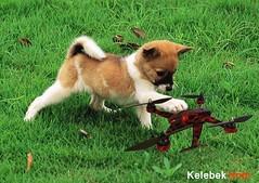 quadcopter-brushless-camera-fpv-kit-5-8 (kelebekhobi) Tags: model oyuncak brushless quadcopter