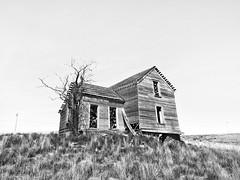 Remnants and Reminders (John Westrock) Tags: old blackandwhite house tree abandoned us washington unitedstates pacificnorthwest ritzville fallingapart olympusomdem5 olympusmzuikodigitaled1240mmf28