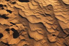 Beetle tracks (orangebrompton) Tags: sahara sand desert morocco mhamid