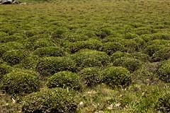 Humedal (Franklin Artiles L.) Tags: parque naturaleza natural venezuela natura lara nacional vegetacin dinira humedal