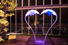 Osaka night. (Vince-leo) Tags: light japan night view   osaka    nikond810 harukas300 nikonaf20mmf18g