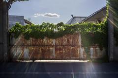 sun gate (the tin drummer) Tags: street old light urban sun landscape gate creeper beams