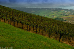 Viti (Il Condor (100K+ views)) Tags: colline vite pescara viti cittsanangelo