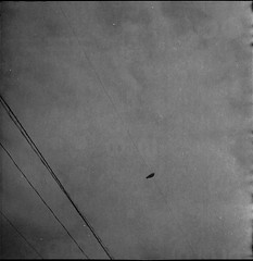 0662 (nori 4_4) Tags: 11 d76 crow shanghaigp3 flexaretii