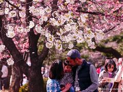 (Shiori Hosomi) Tags: flowers plants japan tokyo march  sakura cherryblossoms    prunus rosales  2016 rosaceae       23