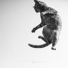 Phoskito!!!!! (Ral Barrero fotografa) Tags: pet cat friend gato