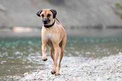 Prancing (brettswift) Tags: dog calgary enzo