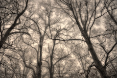 Keeping my head up. (Igor Danilov) Tags: morning trees mist tree monochrome up misty fog sepia forest way one mono haze december peace veil view outdoor head walk iso400 branches web think solo mind serene veins tangle wintersky afterrain 1125 18mm f35 frash nikond90