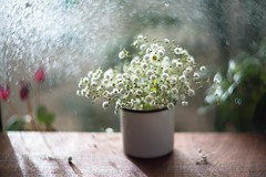 some reasons to live... (romashokk) Tags: wood old plants sun sunlight flower cup window water rain weather vintage garden table drops bokeh sunny rainy mug raindrops botanic wodden