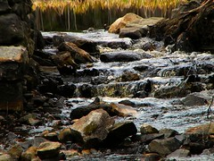 Babbling brook (TimmyDennis) Tags: water rock creek forest outdoors stream stones brook