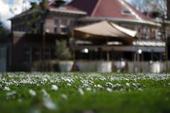 Rotterdam 10-04-2016 SM-12 (Pure Natural Ingredients) Tags: park flowers holland garden spring nikon d70 nederland thenetherlands sigma f18 f28 bloemen euromast zuid 105mm niceweather voorjaar schoonoord d90 50mmoutdoor botanicbotanishetuin