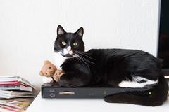 Home alone (Fardo.D) Tags: bear cat teddy