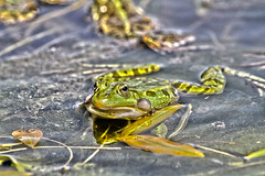 """froschbalz • <a style=""""font-size:0.8em;"""" href=""""http://www.flickr.com/photos/137809870@N02/26414506796/"""" target=""""_blank"""">View on Flickr</a>"""
