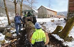 Over Stokk og Stein (MotbakkeMartin (Martin H-N)) Tags: race over og stein obstacle sunnmre rsta stokk follestaddalen hinderlp